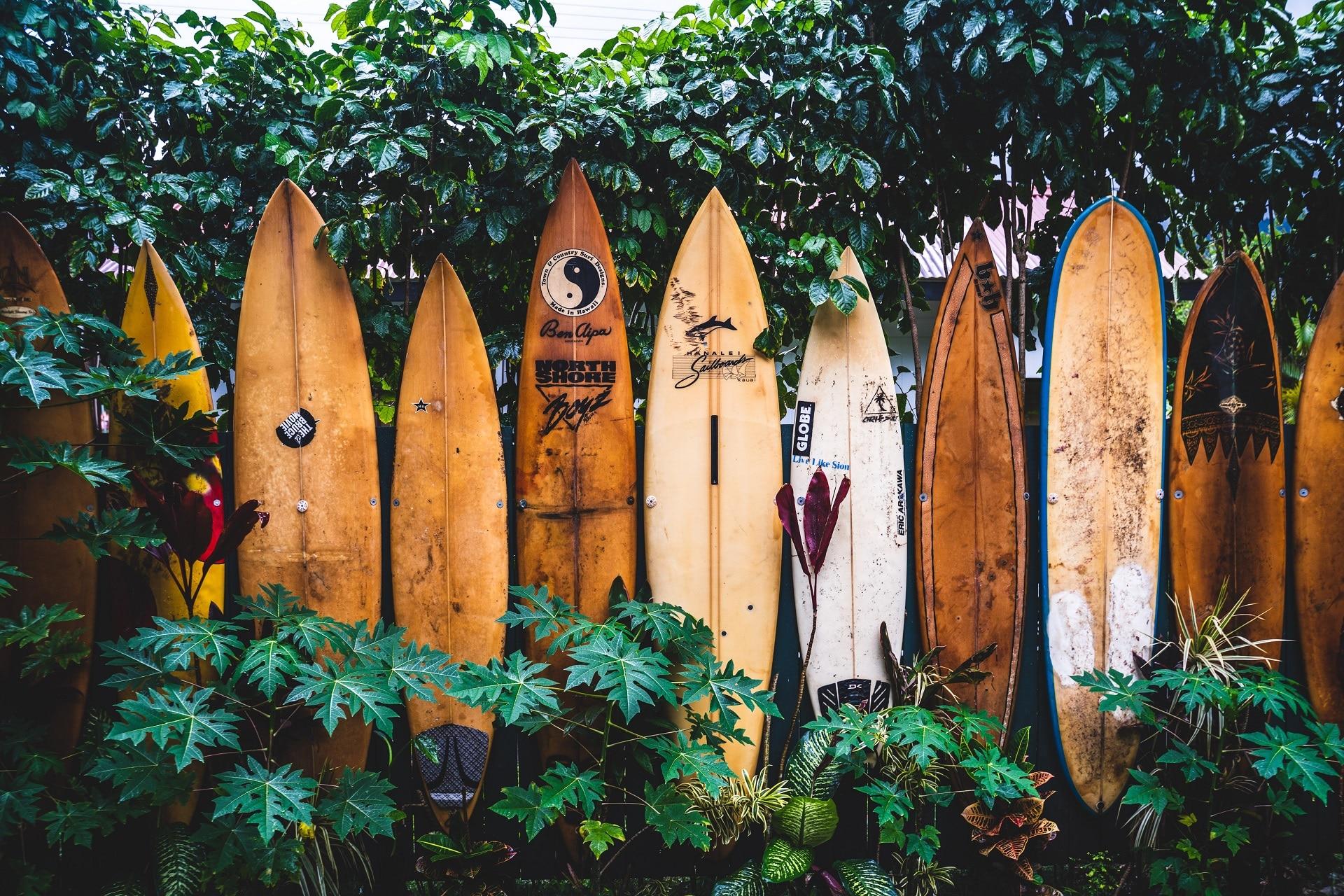 Best Surfboards