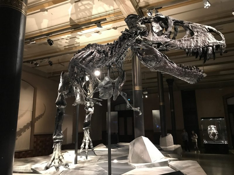 Scientists Prove that T-Rex Walked As Fast As an Average Human